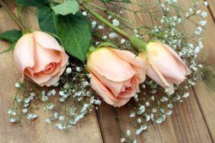 roses-2125787__340_dl